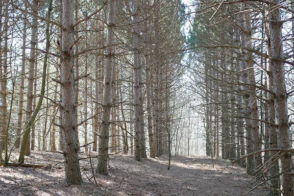 Forestry Expert Witness Wi