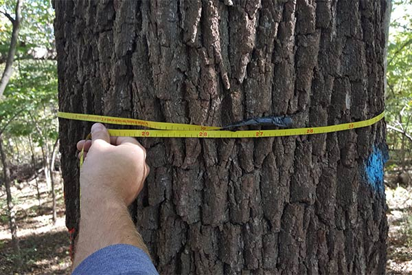Timber Appraisal Services Wisconsin